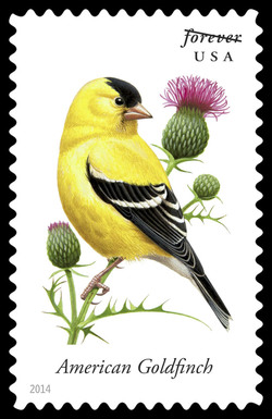 American Goldfinch - Spinus Tristis United States Postage Stamp | Songbirds