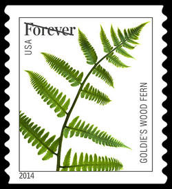 Goldie's Wood Fern United States Postage Stamp | Ferns