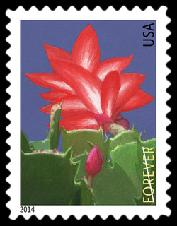 Christmas Cactus - Schlumbergera Bridgesii United States Postage Stamp | Winter Flowers