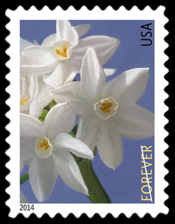 Paperwhite - Narcissus Tazetta United States Postage Stamp | Winter Flowers