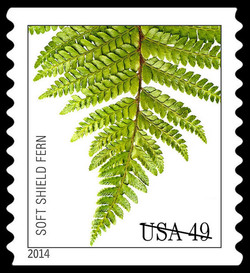 Soft Shield Fern United States Postage Stamp | Ferns
