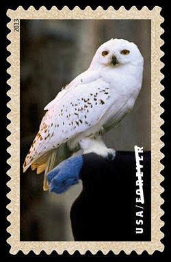 Hedwig the Owl United States Postage Stamp | Harry Potter
