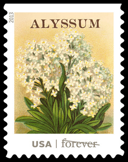 Alyssum Seed Packet United States Postage Stamp | Vintage Seed Packets