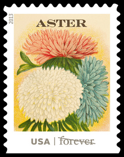 Aster Seed Packet United States Postage Stamp | Vintage Seed Packets
