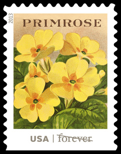 Primrose Seed Packet United States Postage Stamp | Vintage Seed Packets