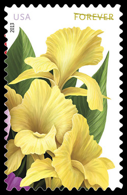 Yellow Cannas United States Postage Stamp | La Florida