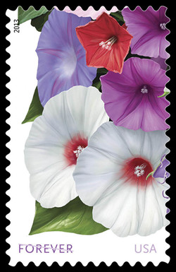 White, Red, and Purple Morning Glories United States Postage Stamp | La Florida