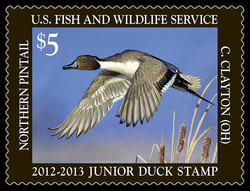 Northern Pintail Duck United States Postage Stamp | Federal Duck Stamp