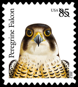 Peregrine Falcon United States Postage Stamp | Birds of Prey