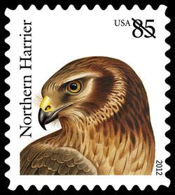 Northern Harrier United States Postage Stamp | Birds of Prey