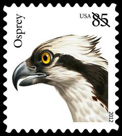 Osprey United States Postage Stamp | Birds of Prey