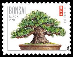 Black Pine Bonsai United States Postage Stamp | Bonsai Trees