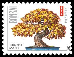 Trident Maple Bonsai United States Postage Stamp | Bonsai Trees