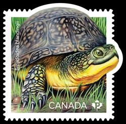 Endangered Turtles Canadian Postage Stamp Series