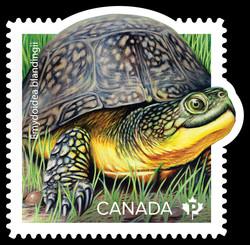 Blanding's Turtle - Emydoidea Blandingii Canada Postage Stamp | Endangered Turtles