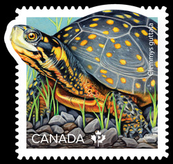 Spotted Turtle - Clemmys Guttata Canada Postage Stamp | Endangered Turtles