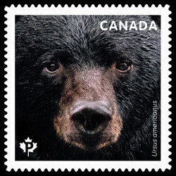 Bears Canadian Postage Stamp Series