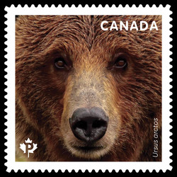 Grizzly Bear - Ursus Arctos Canada Postage Stamp | Bears