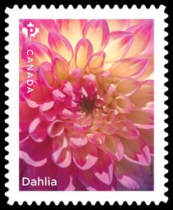 Pink Dahlia Canada Postage Stamp | Dahlias