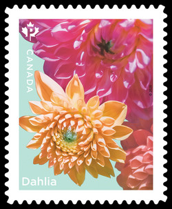 Three Dahlias Canada Postage Stamp | Dahlias