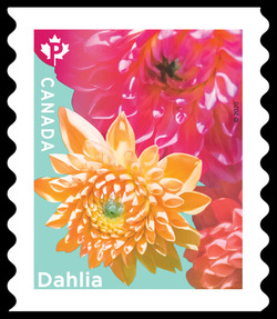 Three Dahlias - Coil Canada Postage Stamp | Dahlias