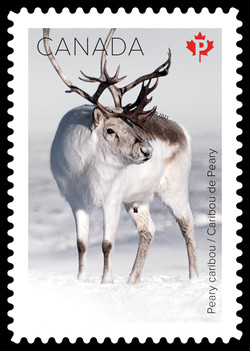 Peary Caribou Canada Postage Stamp | Snow Mammals