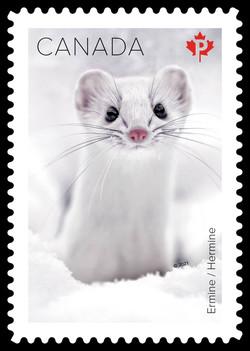 Ermine Canada Postage Stamp | Snow Mammals