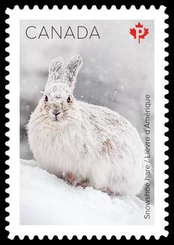 Snowshoe Hare Canada Postage Stamp | Snow Mammals