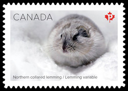 Northern Collared Lemming Canada Postage Stamp | Snow Mammals