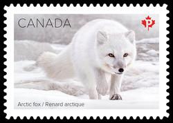 Arctic Fox Canada Postage Stamp | Snow Mammals