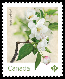 White Malus Maybride Canada Postage Stamp | Crabapple Blossoms