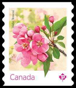 Pink Malus Rosseau - Coil Stamp Canada Postage Stamp | Crabapple Blossoms